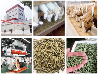 Cattle Feed Machinery Manufacturer