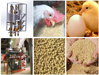 Chicken Feed Machinery